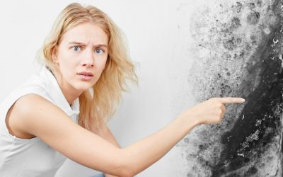 4 Common Questions and Answers About Mold!