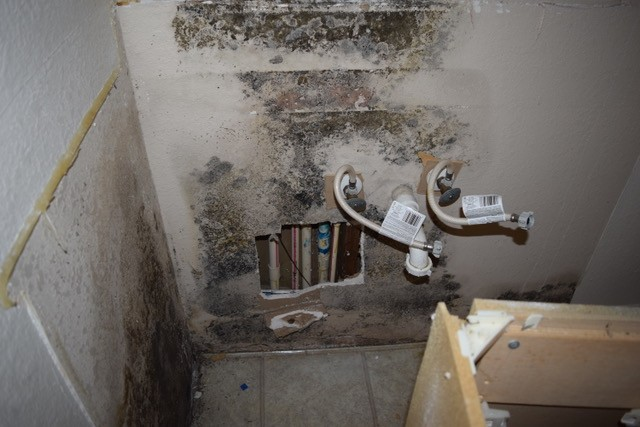 Why Is Mold A Concern?