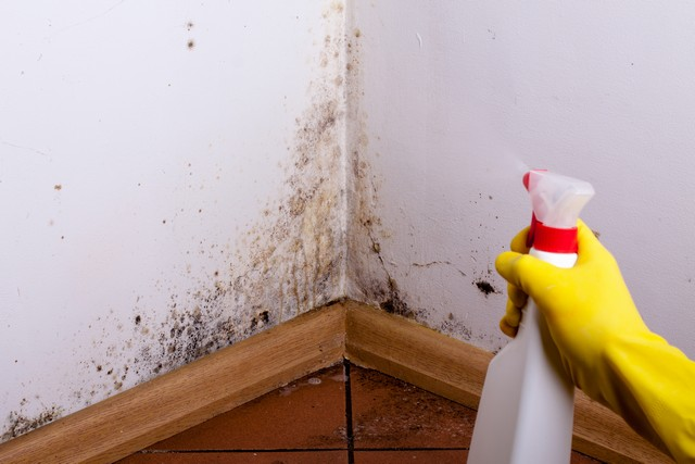 Top 5 Things You SHOULD NOT DO If You Find Mold!
