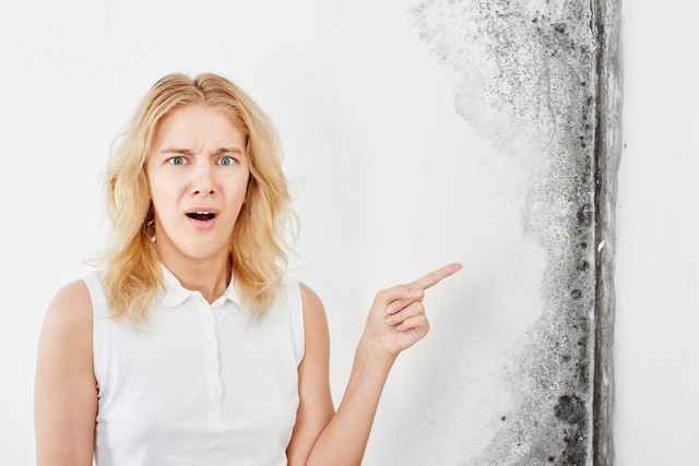 What Happens During Mold Removal?