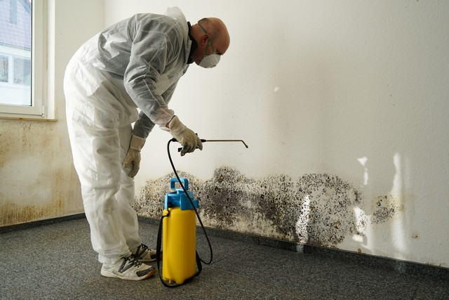 Be Wary Of Companies That Provide Magical Mold Removal Solutions!