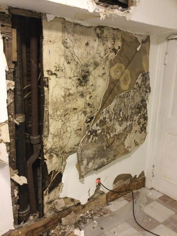 DIY Mold Removal Problems! - It is certainly tempting to grab an all-purpose cleaner and a roll of paper towels when you spot mold in your home or office. You must resist this temptation! Skip the DIY cleaning attempt and lean on the experts for a thorough and safe mold removal. Here's why!